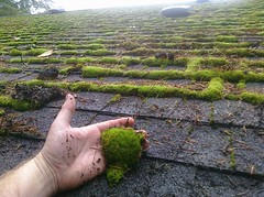 Roof Moss in Beaverton, Or.
