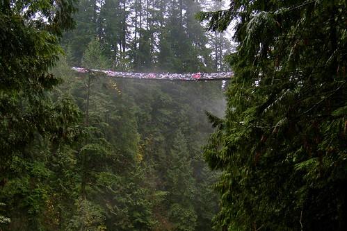 Capilano Suspension Bridge - Bras Across the Bridge