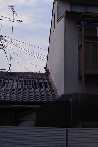 Today's Cat@20091111