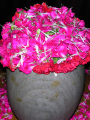 Home ShivaRatri    DSCN0343