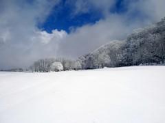 "tanta neve ("" paolo ammannati "") Tags: neve toscana verna casentino chiusidellaverna paoloammannati effettinaturali fotoconneve"