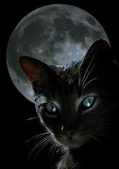 black-cat-moon