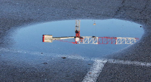 Crane in a Puddle