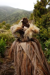 Der Kiwi und sein Baumhaus