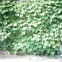 【写真】Leaves (MiniDigi)