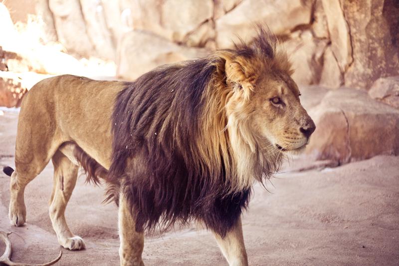Zoo (15 of 15)