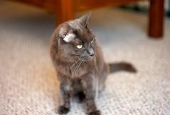 diarrhea cat