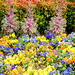 74/365: Spring Flowers