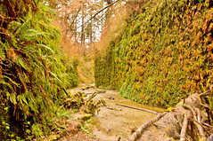Fern Canyon (kmanohar) Tags: california northerncalifornia worldheritagesite westcoast humboldtcounty pacificcoast californiacoast redwoodnationalpark ferncanyon northerncaliforniacoast temperaterainforest prairiecreekstatepark prairiecreek redwoodpark prairiecreekredwoods redwoodcoast humboldtcountyca humboldtcountycalifornia prairiecreekredwoodsstatepark redwoodsstatepark pacificrainforest klamathcalifornia homecreek prairiecreekpark internationalbiospherereserve redwoodpreserve californiarainforest northwestrainforest redwoodreserve cascadiacoast coastalcanyon californiacanyon californiacoastalcanyon californiacoastcanyon humboldtcanyon humboldtcoastcanyon westcoastcanyon pacificcanyon ancientcanyon