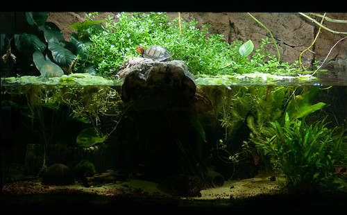 Turtle Aquarium by designladen.com