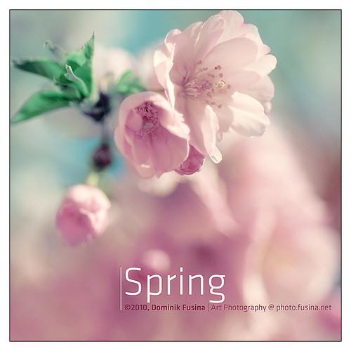 Spring'n roses