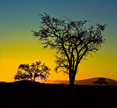 namibian sunrise (Dove*) Tags: africa orange tree sunrise solitude desert namibia stillness sossusvlei respite