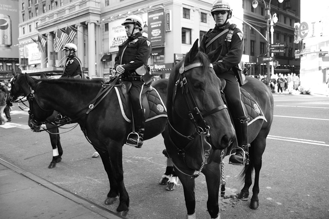 NYPD Horse patrol