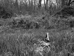 Forgotten (pumpkinrot) Tags: halloween rotting forest scary spooky corpse prop pumpkinrot pumpkinrotcom
