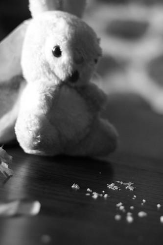 Curioso coniglietto goloso