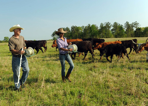 Paxton Pegues and his sixteen-year old daughter, Rachel, lay out temporary fencing to facilitate their rotational grazing plan. This plan allows vegetation in previously grazed pastures to regenerate, encourages an even distribution of grazing throughout the field and allows rest periods in between rotations to  improve the health of the grass.