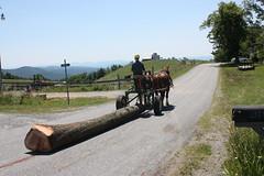 img_0970 (highest_vision) Tags: horse suffolk logging punch hemlock draft deepgap westernnorthcarolina sustainableforestry draftwood restorativeforestry