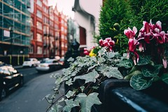 Street flowers (mougrapher) Tags: ifttt 500px street london uk england city architecture urban building photography cityscape light travel sky europe flower flowers green cars londra città architettura vsco