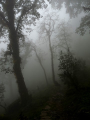 Oak forest in mist (com4tablydumb) Tags: india tourism nature trek scenery wildlife hills uttaranchal himalayas monal northernindia uttarakhand tungnath chopta monalpheasant alpinehabitat