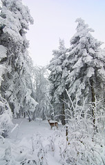 + first_snow_of_the_season (david.richter) Tags: wood autumn winter white snow fall nature forest canon germany landscape geotagged deutschland photography eos rebel europa europe raw outdoor wildlife saxony explore sachsen cpl xsi circularpolarizer superwideangle erzgebirge oberwiesenthal singleexposure ishootraw oremountains fichtelberg 450d rebelxsi tokina1116mmf28atx116prodx strictlygeotagged reddotphotography wwwdavidrichterphotographycom exploredagainaftercountlessothershots