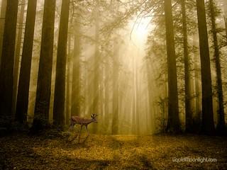 Autumn in the Redwoods - California