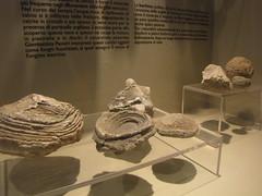 scodelle di calcite della zona di sasso simone  e  sferoidi di bariteal museo di sestino VT