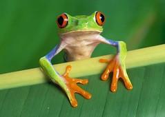 frog (garrettblumenstock) Tags: cool videos picks