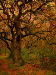 Medusa (perseverando) Tags: autumn tree nature interestingness branches rivington explore medusa tangled naturesfinest writhing mywinners platinumphoto infinestyle perseverando magicunicornverybest magicunicornmasterpiece
