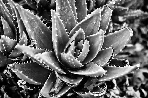 Aloe's Texture