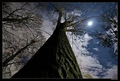 fluffy nights (camouflage808) Tags: vienna wien night nikon fx rosenhgel 1424 d700