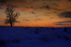 Fire and Ice (Linda's Many Muses) Tags: sunset snow tree landscape whatev frednet lindaplaistedcom
