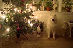 Julhund