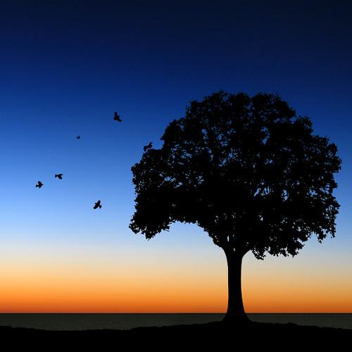 Sunset's Serenity