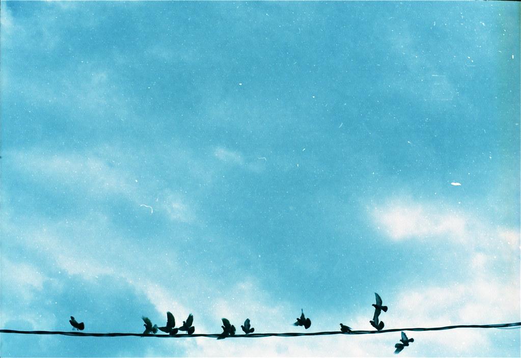 Fly bird, fly