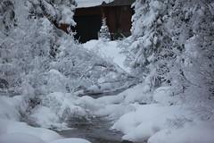 Lake Louise (Max Izod) Tags: trees winter lake snow canada louise alberta fairmont 2010