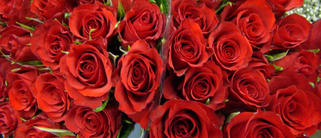 DSC04666 red roses