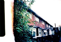Some green (ale2000) Tags: street houses plants holland green film netherlands geotagged xpro kodak crossprocess cosina nederland strip netherland photowalk olanda cx2 filmstrip firstshot zaanstad koogaandezaan koog epr koogbloemwijk schiera primoscatto aledigangicom geo:lat=52457408 geo:lon=4807033