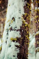Snow-79