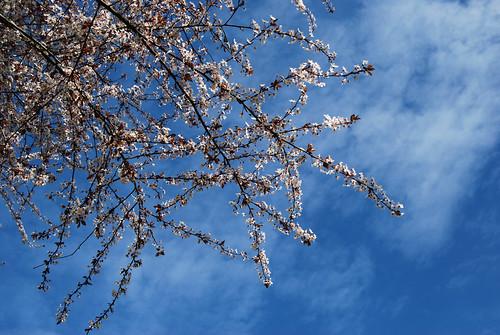 5 - Plum Blossom Time