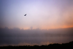 04:28, dawn fog landscape river Crane (czdistagon.com) Tags: cz contax distagon 3514 czcontaxdistagon3514 river morninglight morning landscape updatecollection yourwonderland love czdistagon czdistagoncom aleksandrmatveev carlzzeiss zeiss dawn fog crane volga