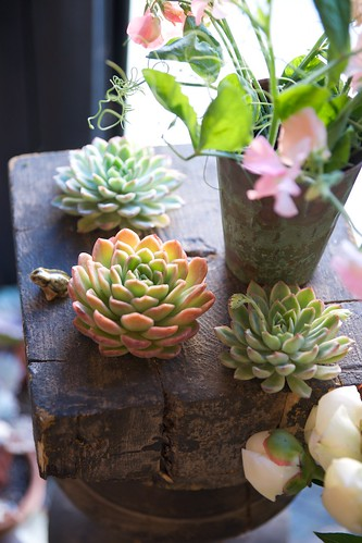 succulents by scott w. baker