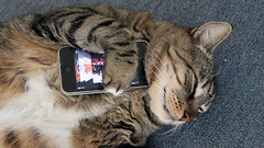 Meatloaf Loves His iPhone (37prime) Tags: music cats pets apple cat feline punk nap sleep punkrock meow badreligion macs iphone