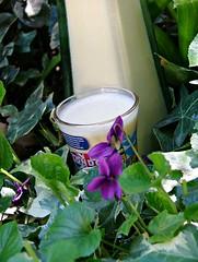 eggnog2 (briiblog) Tags: cinnamon sugar cloves rhum zucchero vanillia egges uova eggnogg cannella garofano