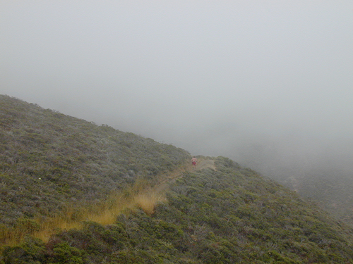 runner-in-fog.jpg