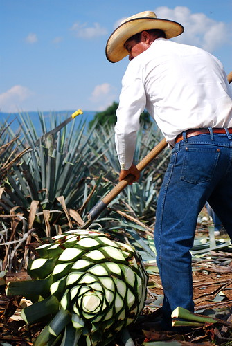 economics of tequila Carlos soto, a native of costa rica, is the founder and ceo of nosotros tequila,  a 100 percent agave tequila produced in tequila, mexico soto earned a.