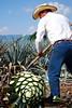 fotos tequila jalisco