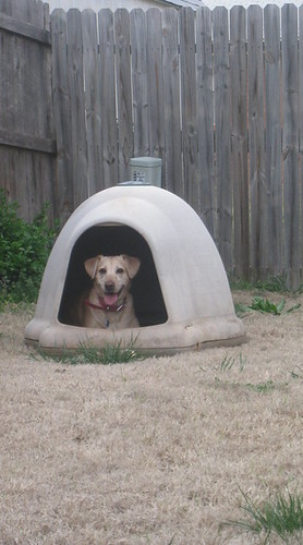 Missy Dog house