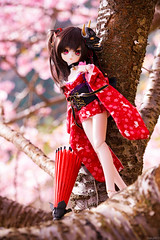 河津桜 (Haku1923) Tags: dd dollfiedream doll dollfie mdd sakura 桜