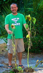 Steve and his freshly picked sunflowers. (LarryJay99 ) Tags: streetpeople man dude male floridapeople lakeworth dudes guys facialhair guy foliage posers people shorts hunk men smile flipflops legs lakes stockcategories cargopants pserrs canonefs18135mmf3556is braghettoni