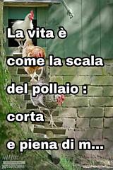 https://www.facebook.com/MossoTiziana/ #Tiziana #Mosso #Tizi #Twister #Titty #link #divertente #aforisma #citazione #frase #buongiornoatutti #scala #pollaio #galline #vita #detto #proverbio (tizianamosso) Tags: citazione tiziana detto link divertente proverbio galline titty twister pollaio tizi mosso buongiornoatutti frase scala vita aforisma